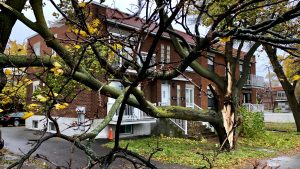 Strong wind gusts snapped tree branches and downed power lines in Montreal
