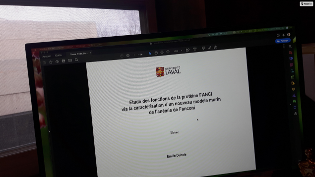 Phd thesis immigration