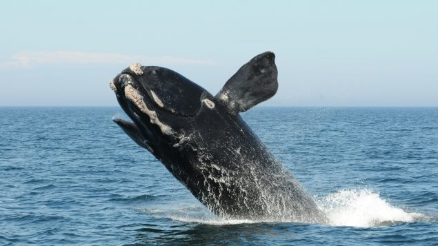 Canada joins international group of 22 countries to protect world's oceans