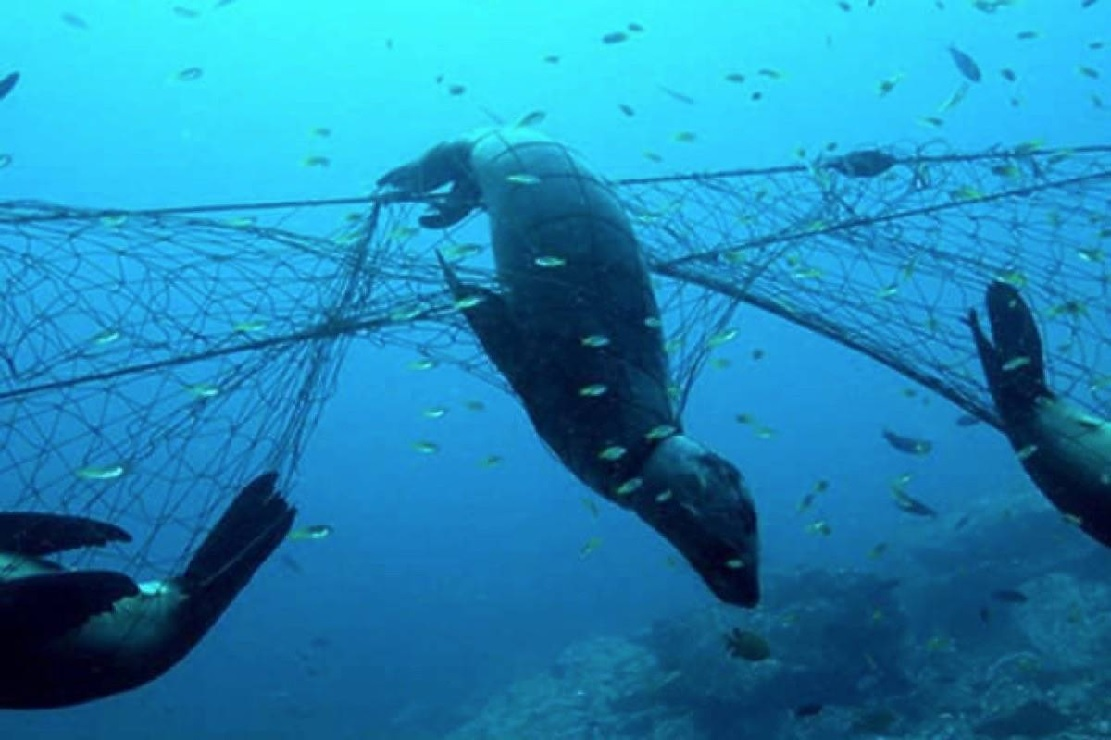 Multi-million dollar Canadian effort launched to clean oceans of 'ghost gear'