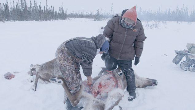 Two men gutting a caribou.