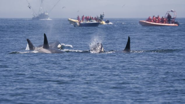 Coast guard takes steps to protect Pacific coast whales