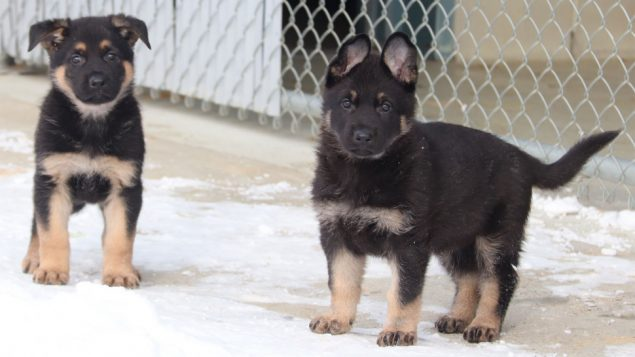 RCMP puppy naming contest begins