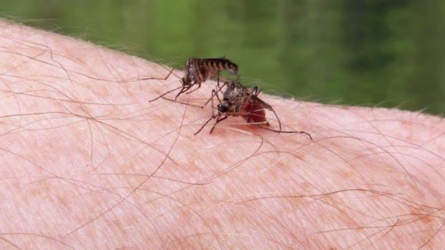 Canadians more afraid of sharks than mosquitoes: malaria campaign
