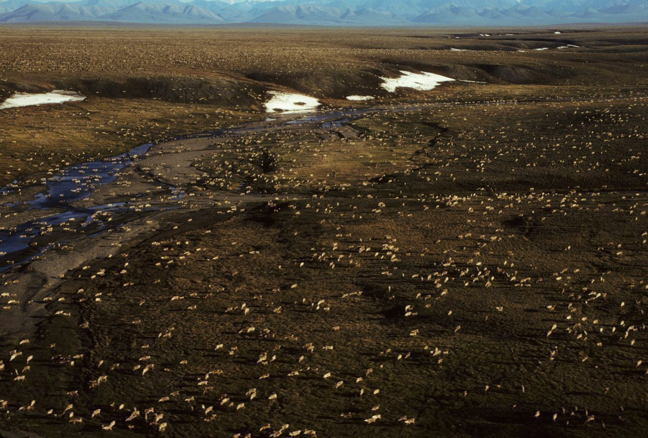 Arctic refuge oil rights auction faces uncertain response
