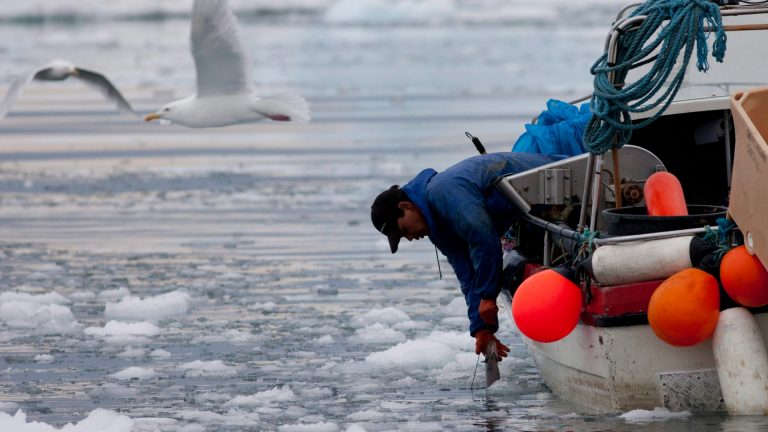Climate change master's degree being planned for Ilulissat, Greenland