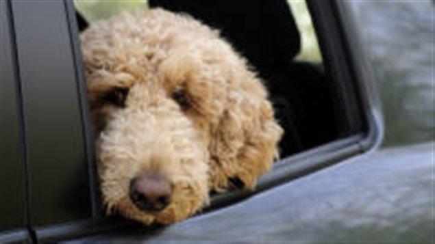 Hibridación de perros y otras especies