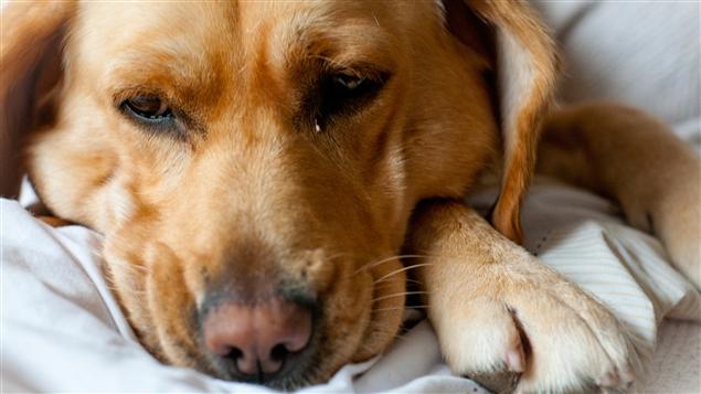 La vacunación puede prolongar la vida de los animales