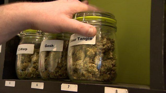 Los precios del cannabis en el mundo real son cada vez más baratos dice Estadísticas Canadá.. ( Radio Canada/CBC/Chanss Lagaden)