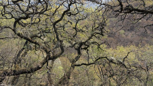¿Ha escuchado hablar de los bosques tropicales 𝐬𝐞𝐜𝐨𝐬?  | Episodio #4 | [Serie podcast]