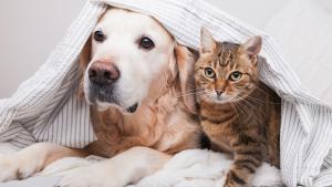 Coronavirus: pandemia, reapertura y cuidado de los animales