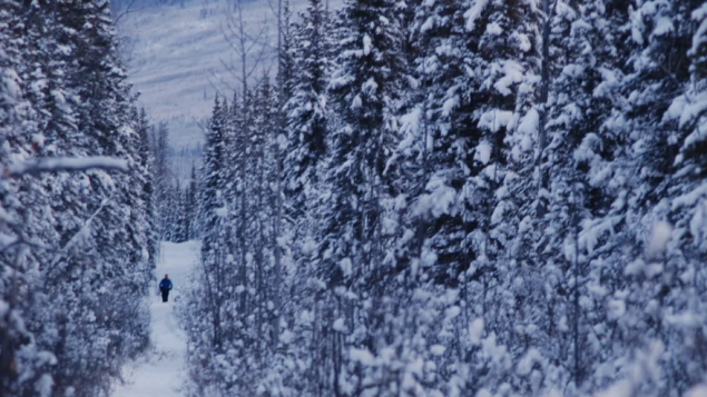 COVID: peligra el Yukon Arctic Ultra, el ultramaratón más difícil del mundo
