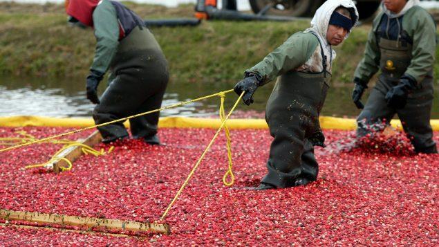 Covid-19: demoras en la contratación de trabajadores agropecuarios extranjeros