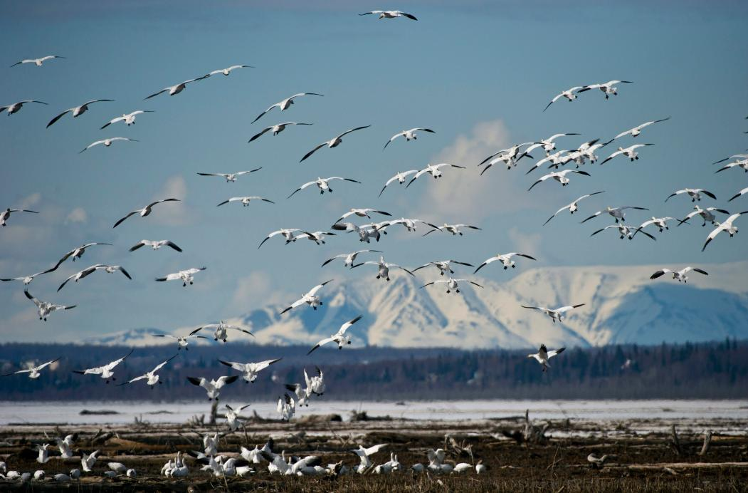 Alaska lanscape. Oil and gas development in the state remains much debated. (Marc Leste/The Anchorage Daily News/AP)