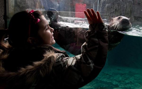 Alaska_sea_otter2