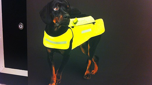 One of the protective vests that can help dogs against wild boar attacks. Photo: Tomas Lindberg/Swedish Radio