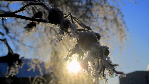 Expect sub-zero temperatures across the country next week. Image: Anna Sirén / Yle