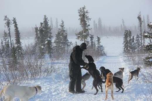 Taking dogs out for morning walk. Photo: Eilis Quinn, Radio Canada International.