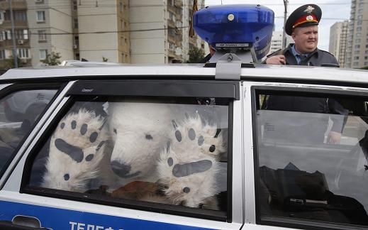 A Greenpeace activist, dressed as a polar bear, sits inside a police car after being detained outside Gazprom's headquarters in Moscow, Russia, Wednesday, Sept. 5, 2012. Russian and international environmentalists are protesting against Gazprom's plans to pioneer oil drilling in the Arctic. (AP Photo/Misha Japaridze