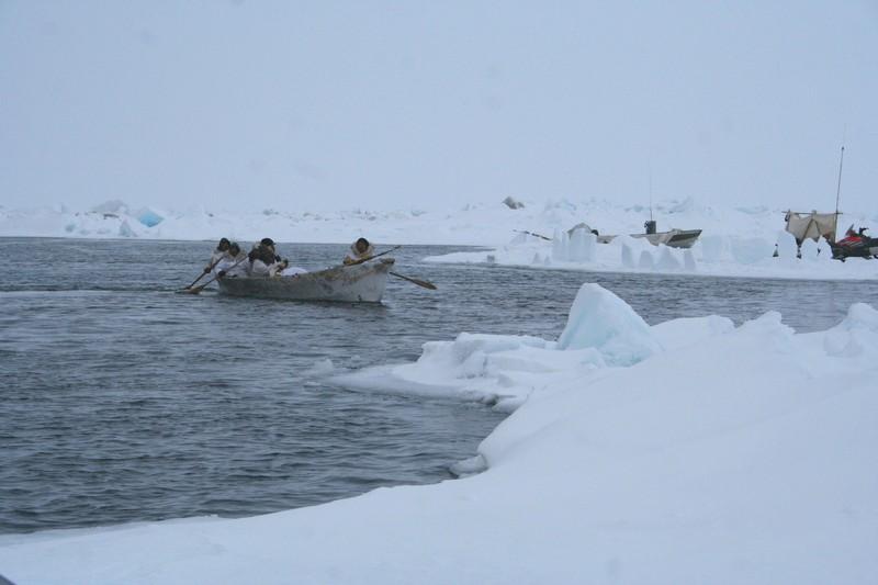 Barrow whaling crew return to the sea ice edge in the their umiaq (seal skin boat). Photo courtesy Shari Gearheard