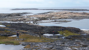 Inuit field guides conduct surveys for eider duck nests in northern Canada. Inuit communities in both Canada and Greenland are taking part in avian cholera monitoring programs. (Sam Iverson/Environment Canada)