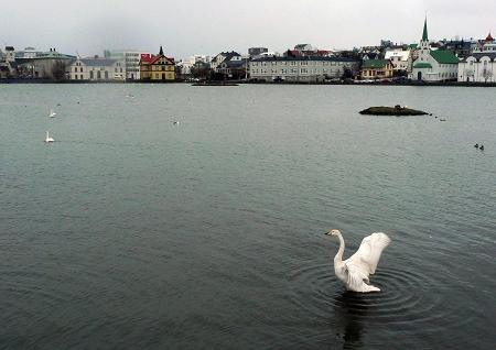 A swan spreads its wings in the small lake adjacent to Iceland's capital city of Reykjavík. THE CANADIAN PRESS/Bob Weber
