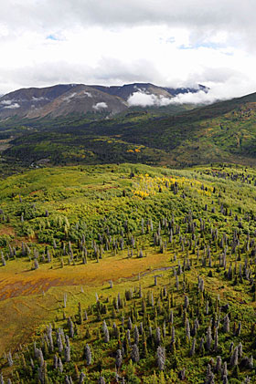 A valley in the Yukon's Kluane National Park in summer: a collection of unique ecosystems surround Canada's tallest mountain. (Sean Kilpatrick / Canadian Press)