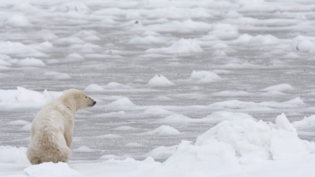 New funding will support polar bear research in Canada's Northwest Territories and the eastern Arctic territory of Nunavut. The Candian Press.