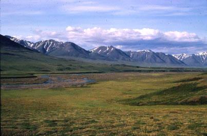 Arctic tundra   Photos Courtesy of National Park Service