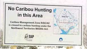 The N.W.T. government's ban on hunting in the Bathurst caribou herd's winter range began on Jan. 1. Dene leaders questioned the legitimacy of the ban, arguing that it infringes on aboriginal hunting rights. (CBC)