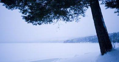 Swedish Lapland. (Jonathan Nackstrand/AFP)