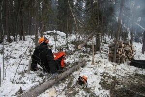 Doug takes a short break, felling trees is a tiring business even when you have a modern chain saw.