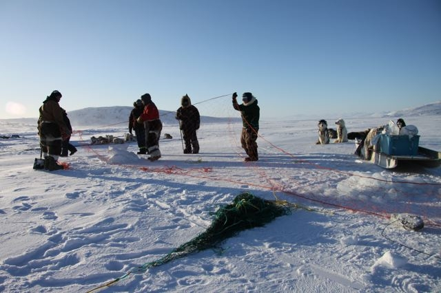 Inuit hunters set up seal nets under the ice near Clyde River, Nunavut. Photo by Levon Sevunts.