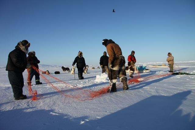 Inuit hunters set up fishing nets under the ice near Clyde River, Nunavut. Photo by Levon Sevunts.