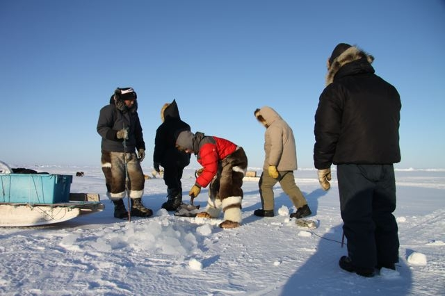 Inuit hunters cut a hole in the sea ice to set up nets to catch fish and seals. Photo by Levon Sevunts.