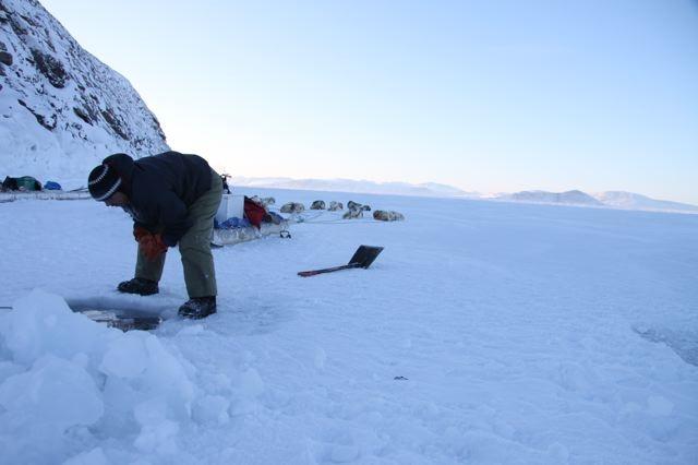 Inuit hunter Joelie Sanguya examines seal nets under the ice. Photo by Levon Sevunts.