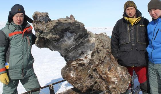 From left, mammoth recovery team scientists Semyon Grigoriev, Evgeniy Ivanov and Gavril Novgorodov pose with the frozen remains of a female woolly mammoth recently uncovered on a remote Siberian island. (Semyon Grigoriev/Mammoth museum)