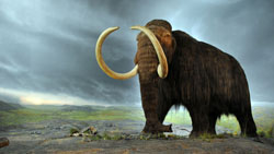 Woolly mammoths, which are related to modern-day elephants, went extinct over most of their range around 10,000 years ago. (Flying Puffin/Wikimedia Commons)