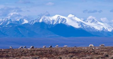 The debate over whether to open the coastal plain in the Arctic National Wildlife Refuge to oil exploration is back in the news. And as always, the lines are clearly drawn in Washington, D.C. (USFWS, Alaska Dispatch)