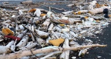 Trash from the 2011 tsunami in Japan finds its way ashore at Beach River on Montague Island. (Chris Pallister, Gulf Keepers of Alaska, Alaska Dispatch)