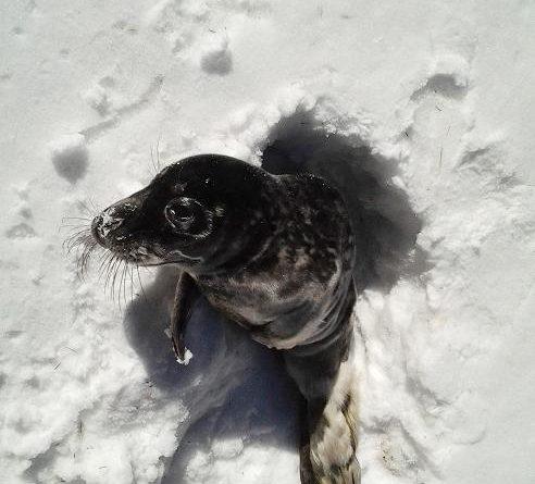 A seal in eastern Sweden. (Kjell Henning / Scanpix Sweden / AFP )
