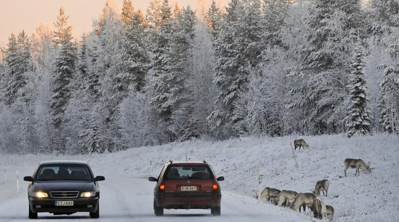Reindeers graze close to a snowy road in Finnish Lapland. (Olivier Morin / AFP)