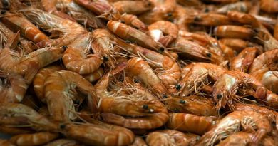 It's forbidden in Sweden to throw back poor quality shrimp in order to get a more valuable catch. (Joel Saget / AFP)