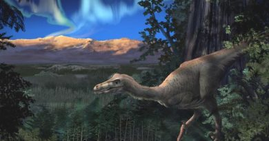 An artist's rendering of a Cretaceous-era sickle-toed hunter in Alaska. (Courtesy Perot Museum of Science and Nature / Alaska Dispatch)