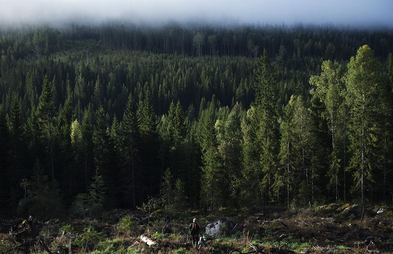 Sweden's 'outdoor access rights' have been translated into several languages to encourage immigrants to explore nature. (Jonathan Nackstrand / AFP)