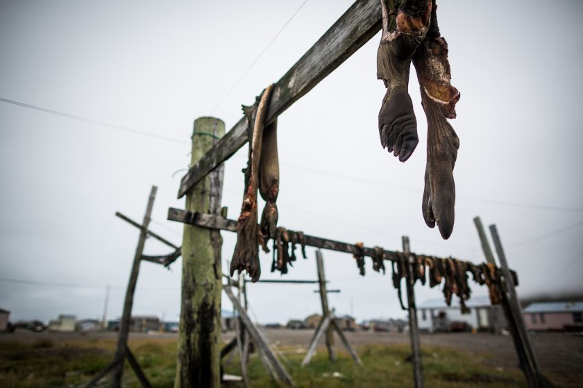 Walrus carcasses hanging to dry in the St. Lawrence island village of Gambell. August 29, 2012. (Loren Holmes / Alaska Dispatch)