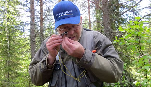 Mawson research director Erkki Vanhanen studies a sample in the field last June. (Riikka Rautiainen / Yle)