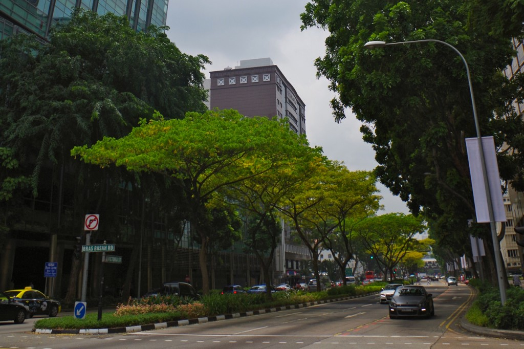 Singapore, a city of trees and skyscrapers. (c) Mia Bennett, 2013.