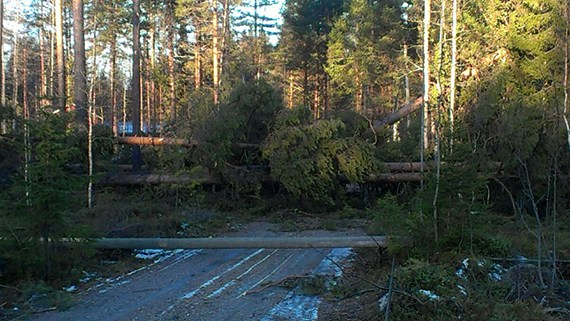 High winds over the weekend hit the northern counties of Västerbotten, Jämtland and Västernorrland. (Vattenfall / Radio Sweden)