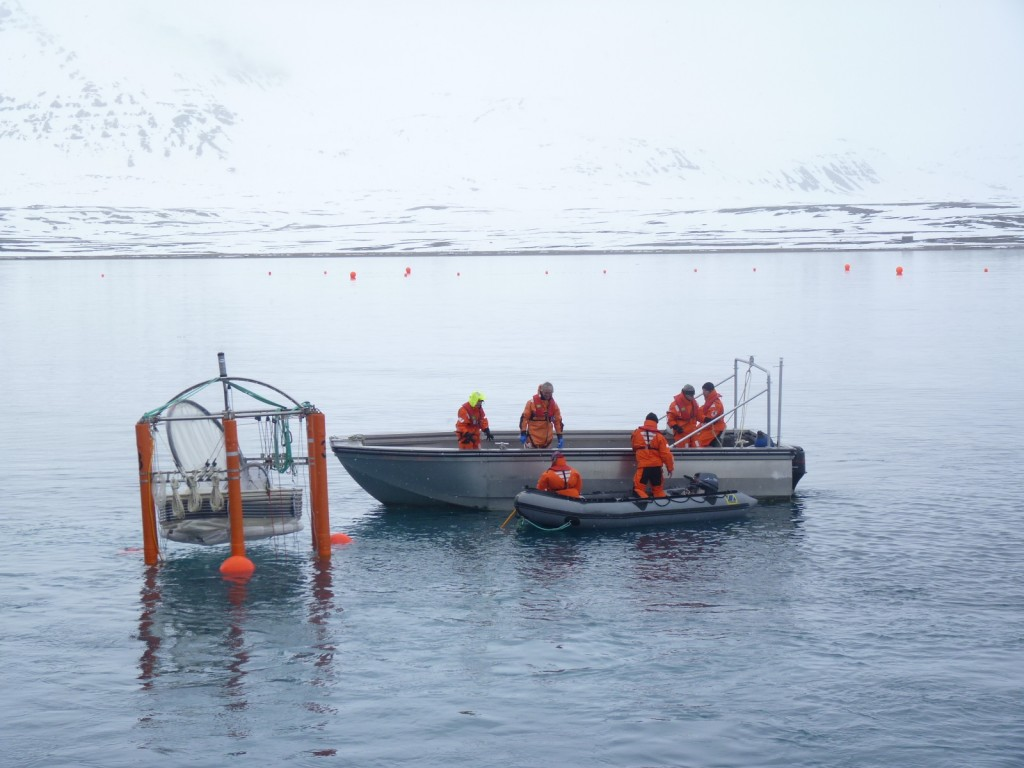 """Mesocosms"" or giant test-tubes going into Arctic waters, 2010.(I.Quaile)"